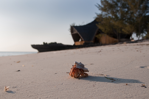HermitCrab_onthe_beach_Oskar_Henriksson