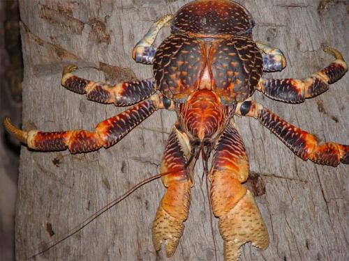 crabs-3