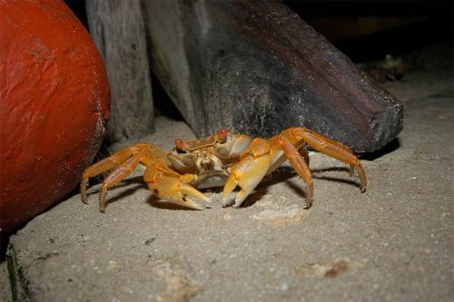 crabs-8