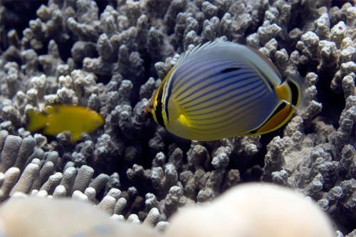 reef-16