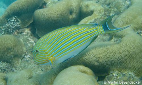 reef-3