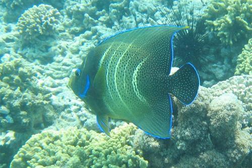 reef-35
