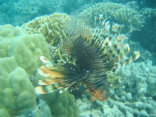 reef-36