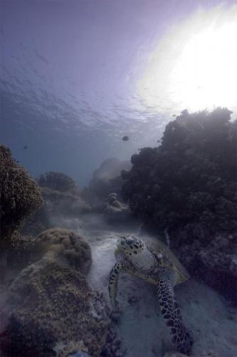 reef-40