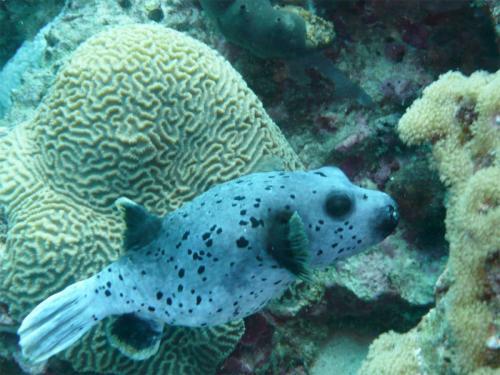 reef-41