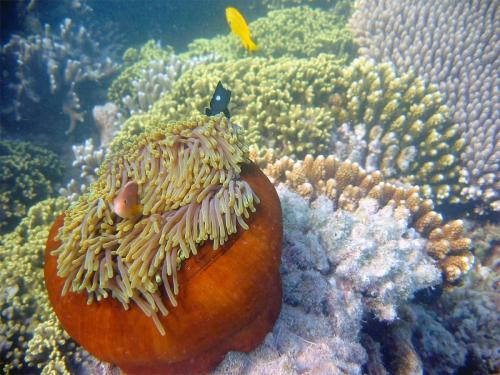 reef-46