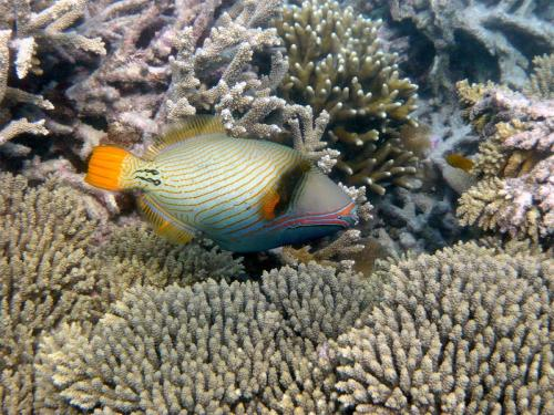 reef-51