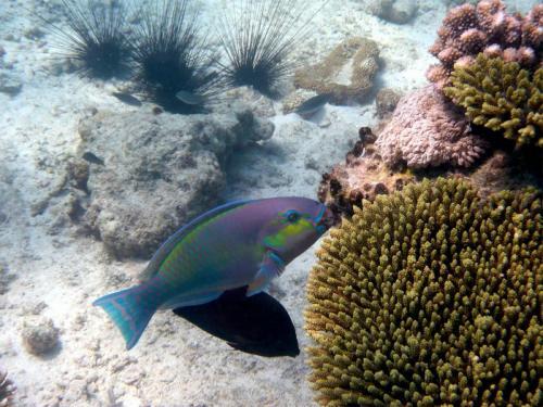 reef-56