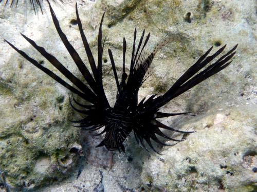 reef-59