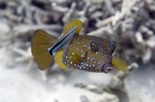 reef-61